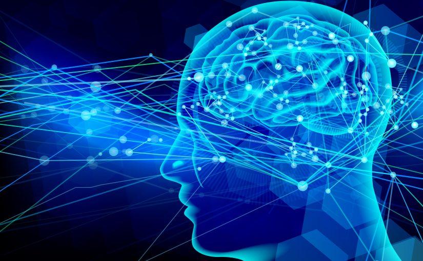 脳科学画像